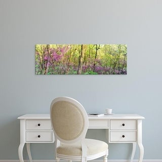 Easy Art Prints Panoramic Images's 'Redbud trees in a forest, Wayne National Forest, Ohio' Premium Canvas Art