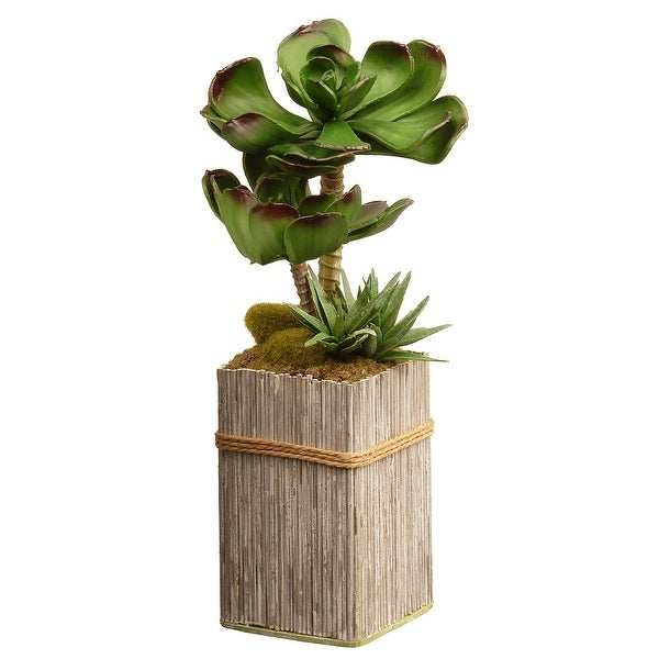 """11"""" Green and Brown Potted Succulent Plant Garden Accents - N/A"""