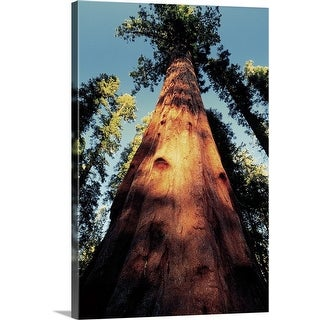 """Sequoia National Park, California"" Canvas Wall Art"