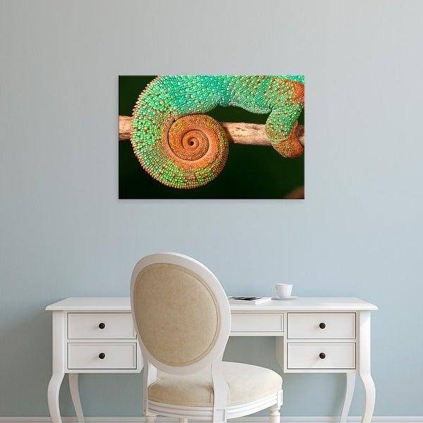 Easy Art Prints David Northcott's 'Rainbow Panther Chameleon I' Premium Canvas Art