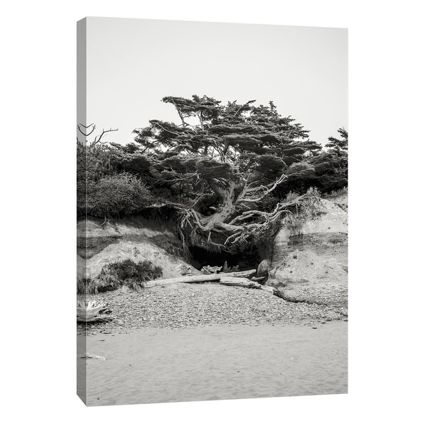 """PTM Images 9-105190 PTM Canvas Collection 10"""" x 8"""" - """"Beach Tree, Kalaloch"""" Giclee Beaches Art Print on Canvas"""