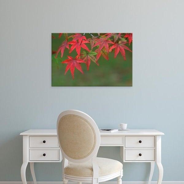Easy Art Prints Rob Tilley's 'Maple Leaves' Premium Canvas Art