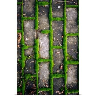 Poster Print entitled Moss growing between bricks