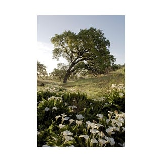 Easy Art Prints Alan Blaustein's 'Oak Tree #90' Premium Canvas Art