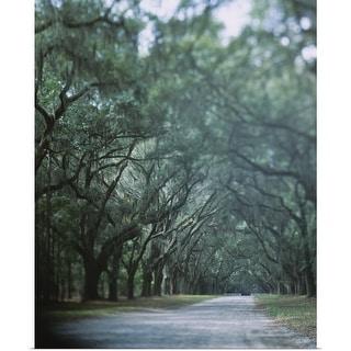 """Trees along a road, Savannah, Georgia"" Poster Print"