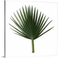 Premium Thick-Wrap Canvas entitled Palm frond - Multi-color