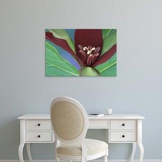 Easy Art Prints Claudia Adams's 'Port Huron Purple Trillium' Premium Canvas Art