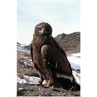 """""""Golden eagle"""" Poster Print"""