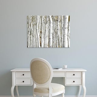 Easy Art Prints PhotoINC Studio's 'Birch Wood' Premium Canvas Art