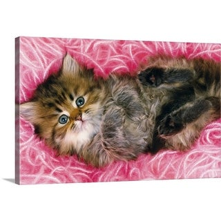 """""""Persian Cat Lying on Bunch of Pink-colored Wool, Looking at Camera, High Angle View"""" Canvas Wall Art"""
