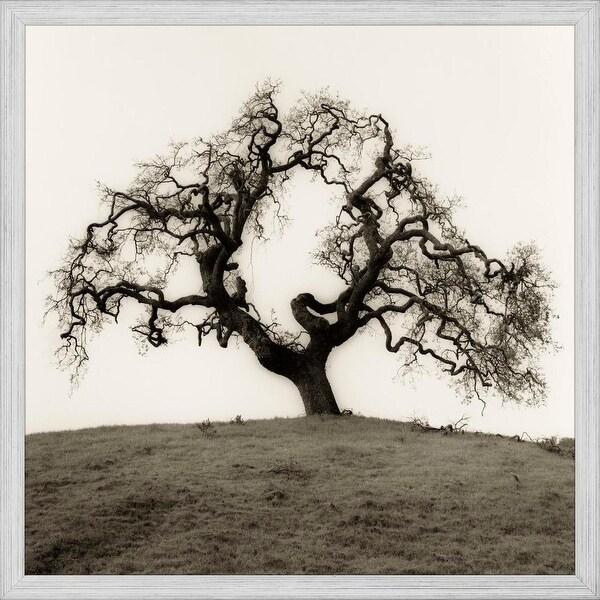 ART PRINT Hillside Oak Tree Alan Blaustein 12x12