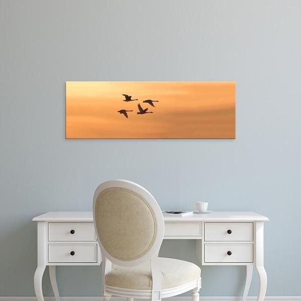 Easy Art Prints Panoramic Image 'Trumpeter Swans, Riverlands Migratory, West Alton, St. Charles, Missouri' Canvas Art