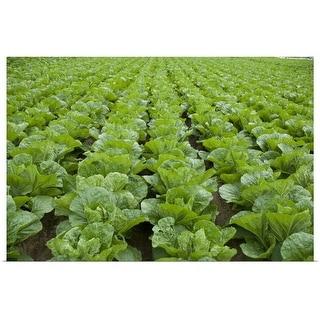 """Organic lettuce farm, Aichi Prefecture, Japan"" Poster Print"
