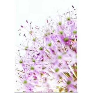 """Close up of allium flower head"" Poster Print"