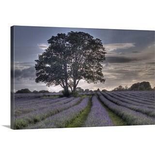 """Lavender Fields"" Canvas Wall Art"