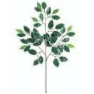 PSF731- 23 in. Deluxe Vg Ficus Spray X3 W-42 Pack of 40