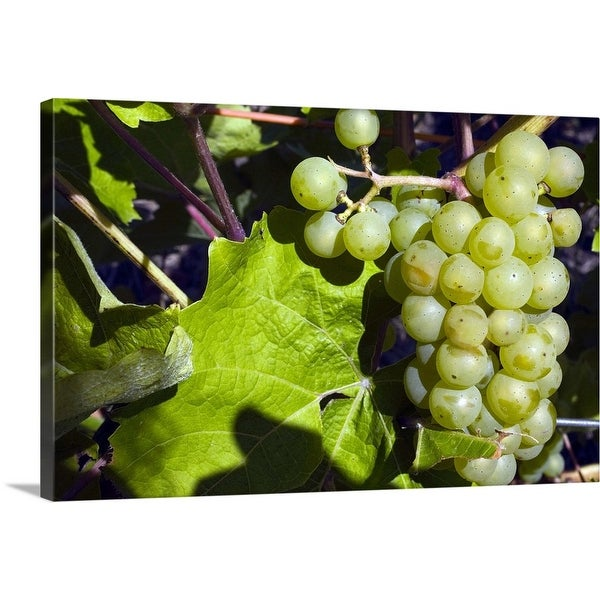 """""""Grapes on the vine"""" Canvas Wall Art"""