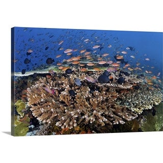 """""""Reefscape with schooling Anthias"""" Canvas Wall Art"""
