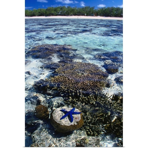 """""""Coral and blue star fish, Lady Elliot Island, Great Barrier Reef, Queensland"""" Poster Print"""