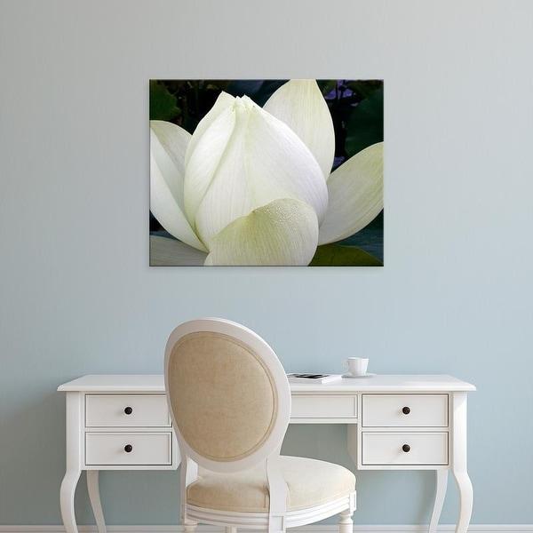 Easy Art Prints Jim Christensen's 'Delicate Lotus IV' Premium Canvas Art