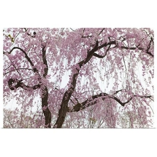 """""""Cherry blossoms bloom in a park in Komoro, Japan"""" Poster Print"""