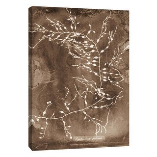 """PTM Images 9-105802  PTM Canvas Collection 10"""" x 8"""" - """"Natural Forms Sepia 2"""" Giclee Seaweed Art Print on Canvas"""