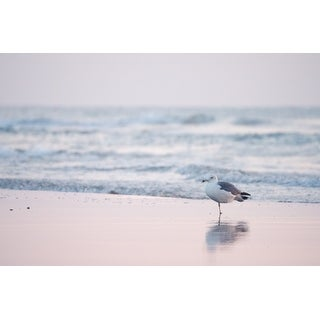 Sea Bird On Beach Photograph Art Print