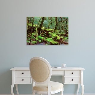 Easy Art Prints Rob Tilley's 'Queensland Rainforest' Premium Canvas Art