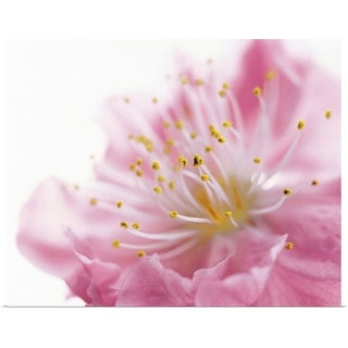 """Pink Flower"" Poster Print"