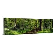 Premium Thick-Wrap Canvas entitled Bluebell Wood Yorkshire England