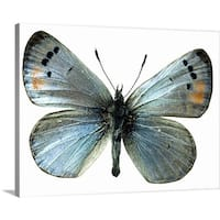 Premium Thick-Wrap Canvas entitled Sonoran blue butterfly - Multi-color