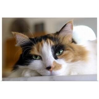 """""""Cat"""" Poster Print"""