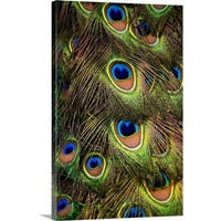 Premium Thick-Wrap Canvas entitled Close-up of the tail feathers of an Indian Peacock - Multi-color