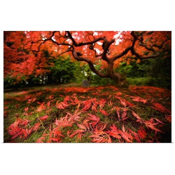 """Maple tree in fall"" Poster Print"