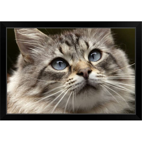 Cat With Blue Eyes Black Framed Print On Sale Overstock 30199453
