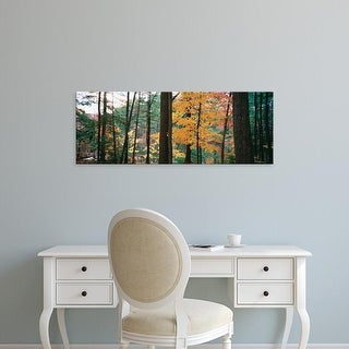 Easy Art Prints Panoramic Images's 'Mid section view of trees in a forest during autumn' Premium Canvas Art