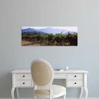 Easy Art Prints Panoramic Images's 'Grape vines in a vineyard, Napa Valley, Napa County, California, USA' Canvas Art