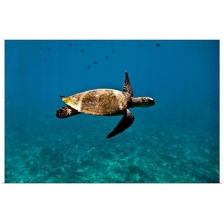 """""""Turtle swimming in the Indian Ocean"""" Poster Print"""