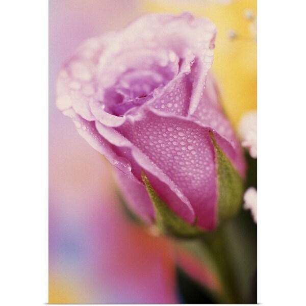 """Rose bud, close up."" Poster Print"