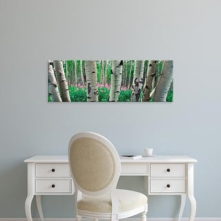 Easy Art Prints Panoramic Images's 'Aspen trees in a grove on the slope of Shadow Mountain, Bridger