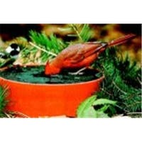 Happy Bird Corporation Wild Bird Deluxe Solar Sipper - Red