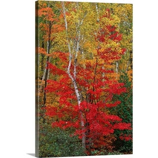 """Forest in autumn"" Canvas Wall Art"