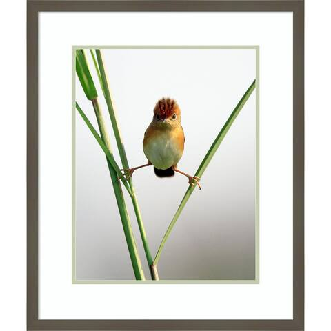 Framed Art Print Kung Fu Master (Bird) by Lina Gunawan 21x25-inch