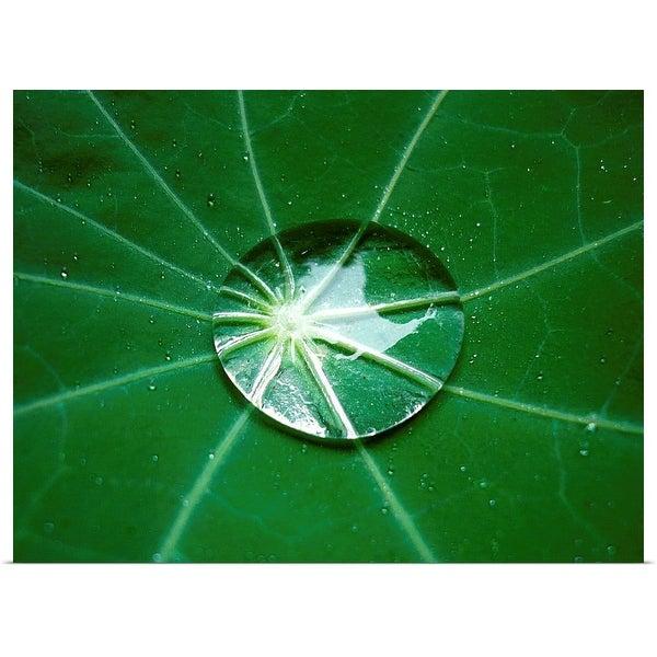 """Lotus Effect on Dark Green Leaf"" Poster Print"
