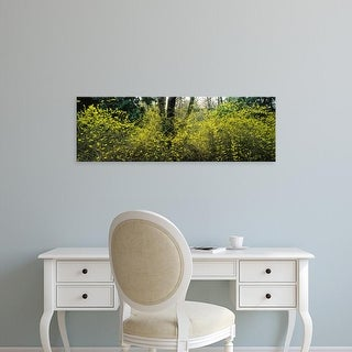 Easy Art Prints Panoramic Images's 'Trees and plants in a park, Washington Park, Seattle, Washington State' Canvas Art