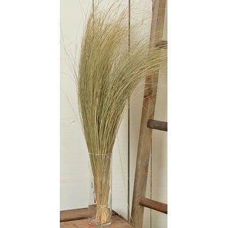 Dried Dune Grass - Natural Large 8 oz bunch Height 34-35in. -- Single Bunch - Natural