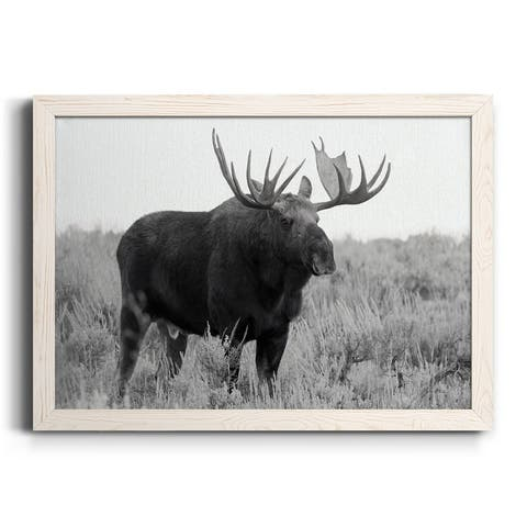 Grand Teton Bull Moose-Premium Framed Canvas - Ready to Hang