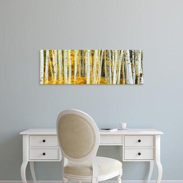 Easy Art Prints Panoramic Images's 'Aspen grove, Phelps Lake, Grand Teton National Park, Wyoming' Canvas Art
