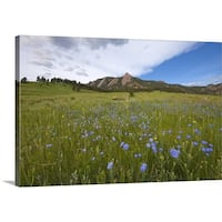 Premium Thick-Wrap Canvas entitled Purple wildflowers in Boulder, Colorado with mountains in background. - Multi-color
