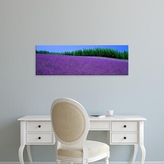 Easy Art Prints Panoramic Images's 'Lavender Field Hokkaido Japan' Premium Canvas Art